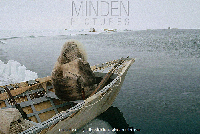 Bowhead Whale (Balaena mysticetus) hunter, an Inuit in traditional clothes sits in sealskin boat waiting for whales, Barrow, Alaska  -  Flip Nicklin