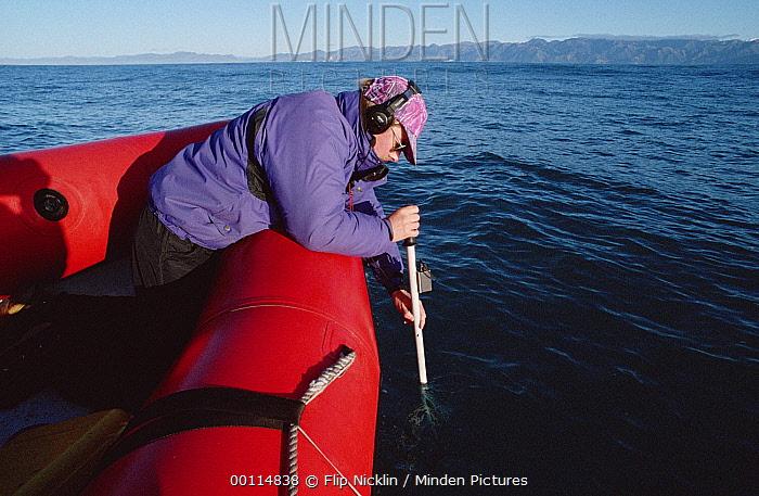 Sperm Whale (Physeter macrocephalus) researcher listening for vocalizations, New Zealand  -  Flip Nicklin