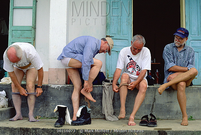 Herpetologists donning pantyhose as a deterrent to Leeches, Tam Dao National Park, Vietnam  -  Mark Moffett