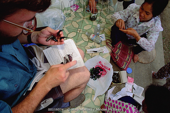 Director of Tula Zoo, Sergei Ryabov, buying beetles from locals for Russian museum, Tam Dao National Park, Vietnam  -  Mark Moffett