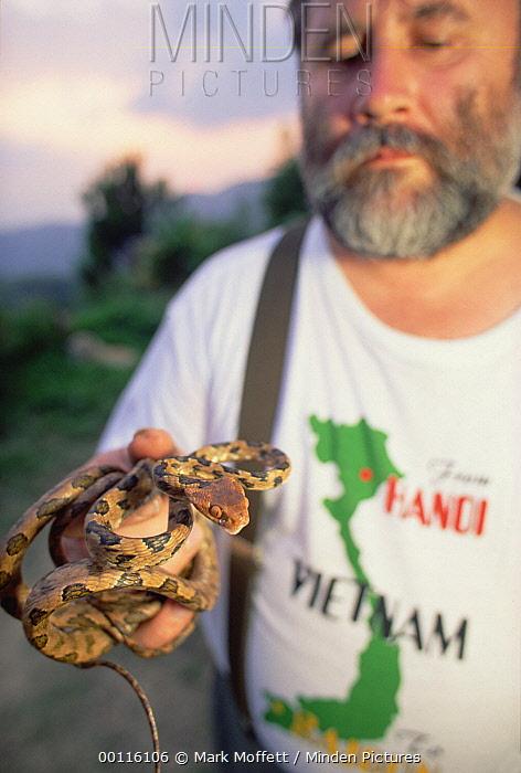 Colubrid Snake (Boiga sp), a newly described species held by Russian herpetologist Nikolai Orlov, Tam Dao National Park, Vietnam  -  Mark Moffett