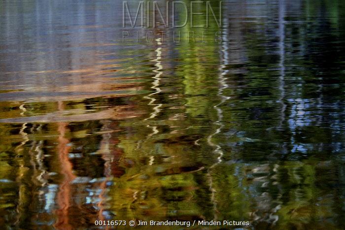 Forest reflection in water, Northwoods, Minnesota  -  Jim Brandenburg