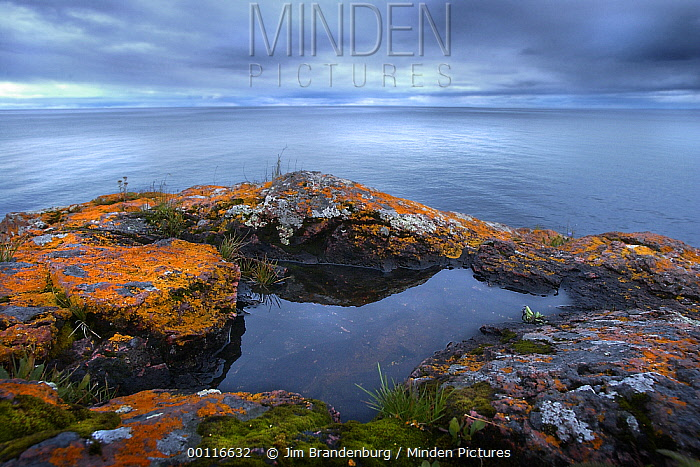 Small pool collected on lichen covered rocks overlooking lake, Northwoods, Minnesota  -  Jim Brandenburg