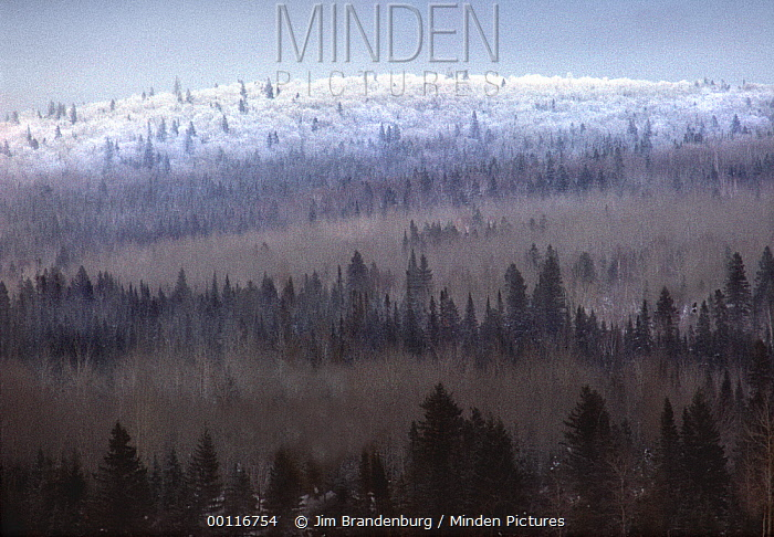 Frost-covered hill rising from boreal forest, Boundary Waters Canoe Area Wilderness, Minnesota  -  Jim Brandenburg