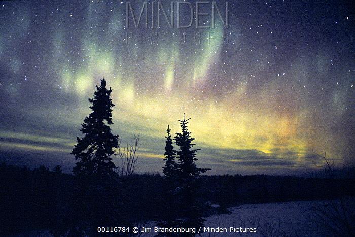 minden pictures stock photos aurora borealis northwoods