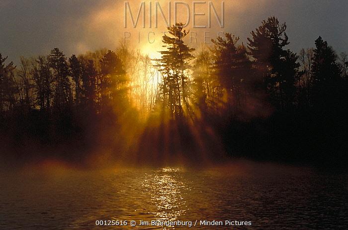 Coniferous forest backlit at dawn, Minnesota  -  Jim Brandenburg