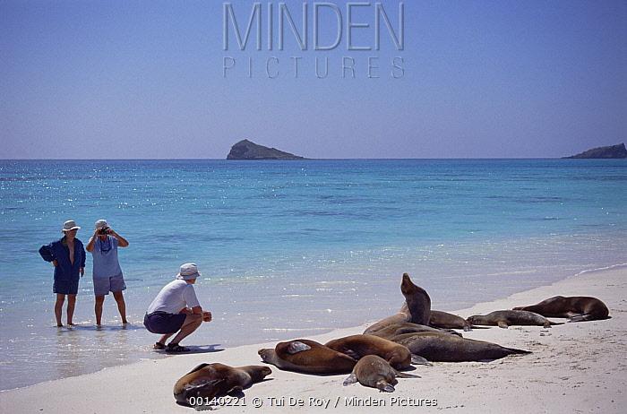 Galapagos Sea Lion (Zalophus wollebaeki) group photographed by tourists, Gardner Bay, Hood Island, Galapagos Islands, Ecuador  -  Tui De Roy
