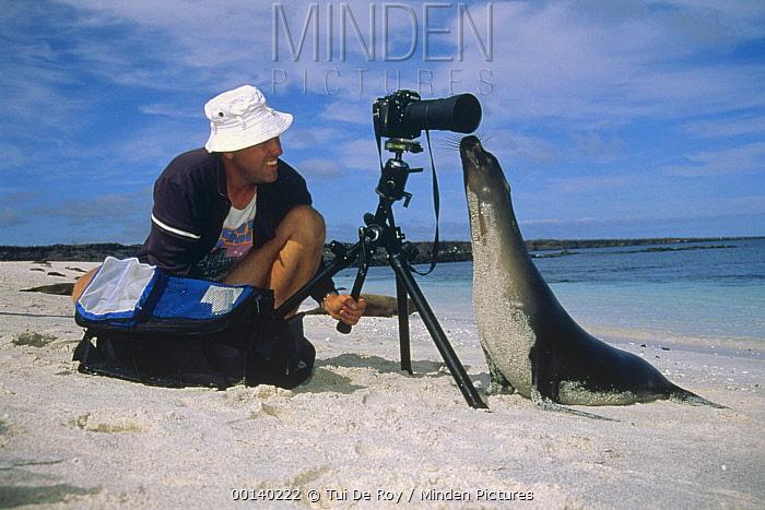 Galapagos Sea Lion (Zalophus wollebaeki) checking out tourist, Mosquera Island, Galapagos Islands, Ecuador  -  Tui De Roy