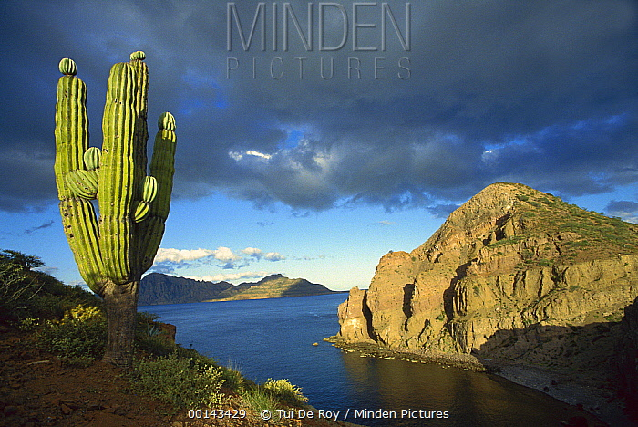 Danzante Island, Sea of Cortez, Baja California, Mexico  -  Tui De Roy