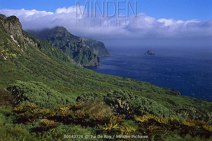 Batwing Fern (Histiopteris incisa), Gough Tree Fern (Blechnum palmiforme), and Island Cape Myrtle (Phylica arborea) on coastal plateau, Gough Island, South Atlantic  -  Tui De Roy