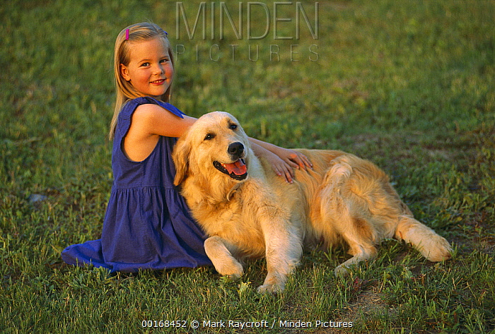 Golden Retriever (Canis familiaris) relaxing on lawn with a young girl  -  Mark Raycroft