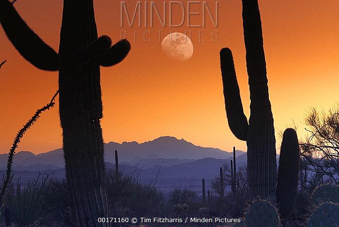 Kitt Peak under moon from Saguaro National Monument, Arizona.  -  Tim Fitzharris