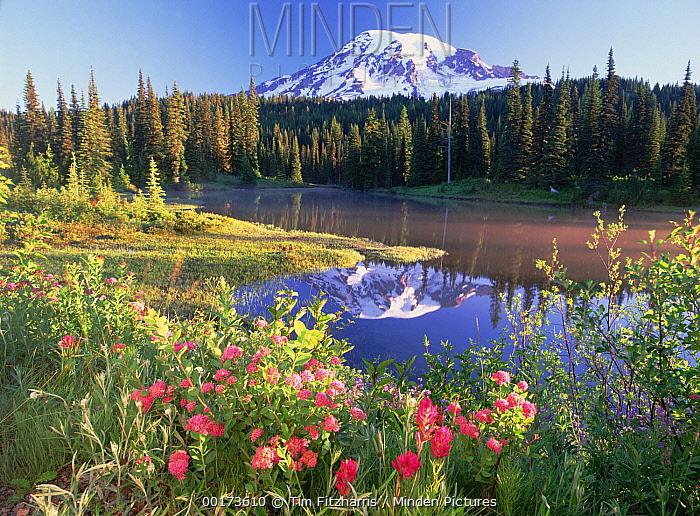 Mt Rainier and wildflowers at Reflection lake, Mt Rainier National Park, Washington  -  Tim Fitzharris