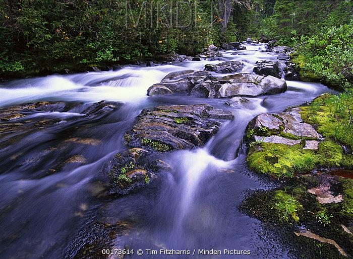 Paradise River, Mt Rainier National Park, Washington  -  Tim Fitzharris