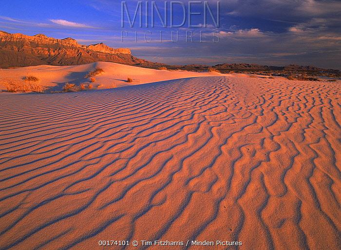 Gypsum dunes, Guadalupe Mountains National Park, Texas  -  Tim Fitzharris