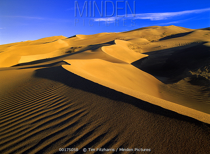 750 foot tall sand dunes, tallest in North America, Great Sand Dunes National Monument, Colorado  -  Tim Fitzharris