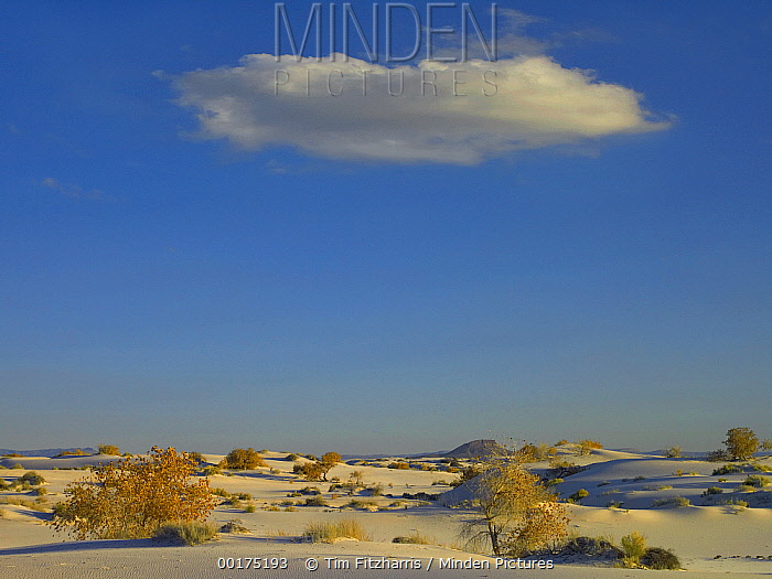 Cloud over White Sands National Monument, Chihuahuan Desert, New Mexico  -  Tim Fitzharris