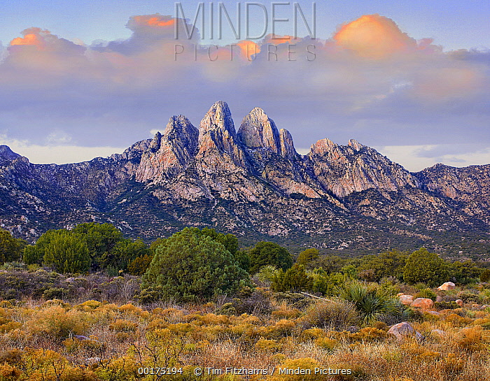 Organ Mountains, Chihuahuan Desert, New Mexico  -  Tim Fitzharris