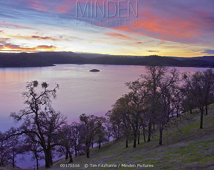 New Melones Lake surrounded by Oak woodlands, man-made reservoir managed by Central Valley Project, Calaveras County, California  -  Tim Fitzharris