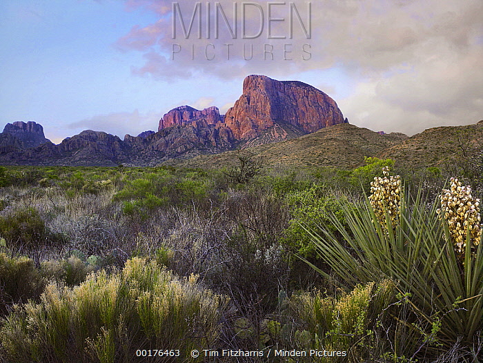 Casa Grande and Chisos Mountains, Big Bend National Park, Chihuahuan Desert, Texas  -  Tim Fitzharris