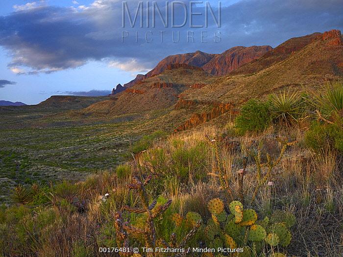 Chisos Mountains, Big Bend National Park, Chihuahuan Desert, Texas  -  Tim Fitzharris
