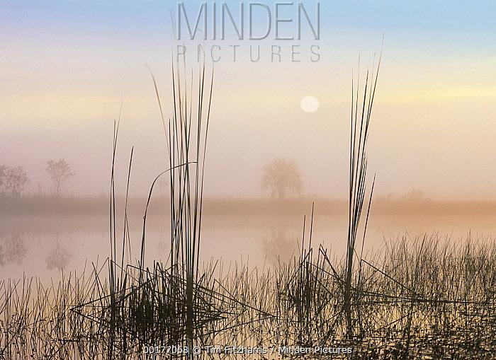 Reeds in Sweet Bay Pond, Everglades National Park, Florida  -  Tim Fitzharris
