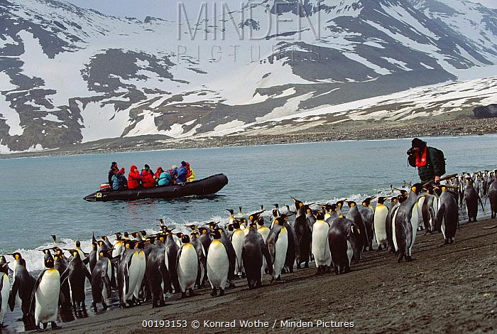 King Penguin (Aptenodytes patagonicus) colony viewed by tourists, South Georgia Island  -  Konrad Wothe
