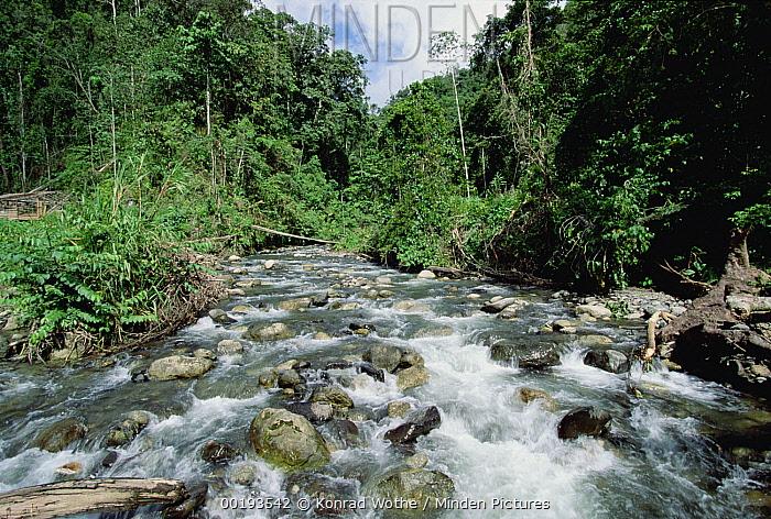 Rainforest stream near the Arfak Mountains, Irian Jaya, New Guinea, Indonesia  -  Konrad Wothe