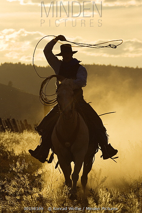 Cowboy on Domestic Horse (Equus caballus) throwing lasso at sunset, Oregon  -  Konrad Wothe