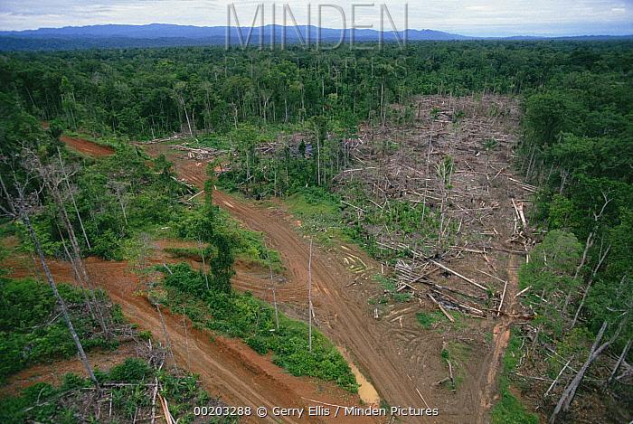 Logging road and erosion in lowland tropical rainforest east of Aird River Delta, Kikori Basin, Papua New Guinea  -  Gerry Ellis