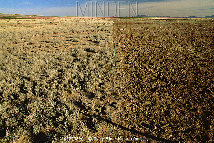 Fence separating over-grazed pasture from native Chihuahuan Desert grassland near Hatch, New Mexico  -  Gerry Ellis