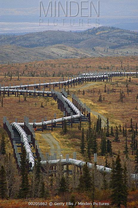 Aerial view of oil pipeline crossing taiga, Alaska  -  Gerry Ellis