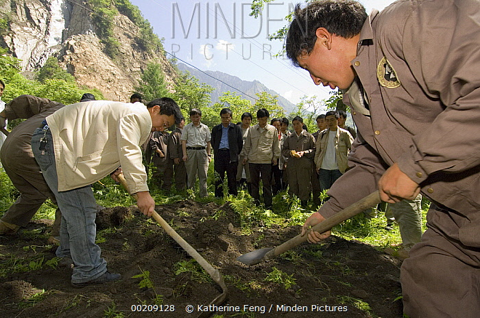 Giant Panda (Ailuropoda melanoleuca) recovery effort, workers bury Mao Mao's coffin after the May 12, 2008 earthquake and landslides, CCRCGP, Wolong, China  -  Katherine Feng