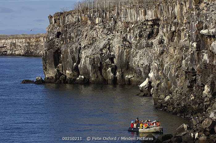 Masked Booby (Sula dactylatra) nesting colony observed by tourists from inflatable boat, Genovesa Island, Galapagos Islands, Ecuador  -  Pete Oxford