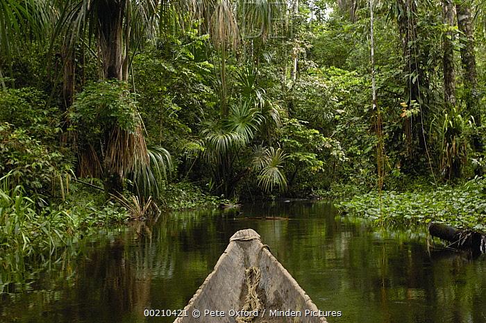 Dugout canoe in blackwater stream, Yasuni National Park Biosphere Reserve, Amazon rainforest, Ecuador  -  Pete Oxford