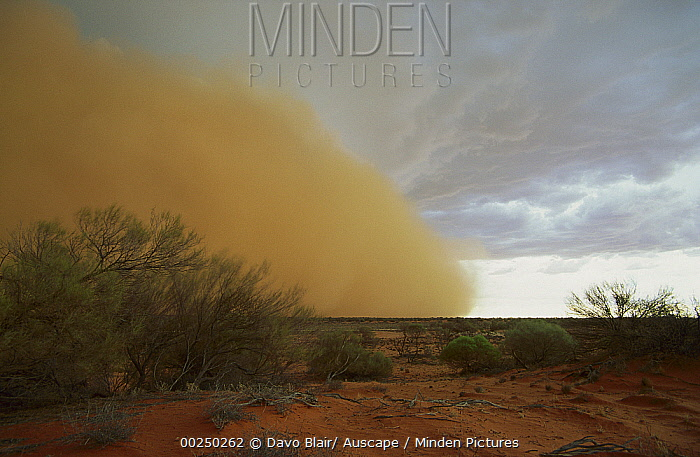 Dust storm in front of small cyclone in the desert near Roxby Downs, South Australia  -  Davo Blair/ Auscape