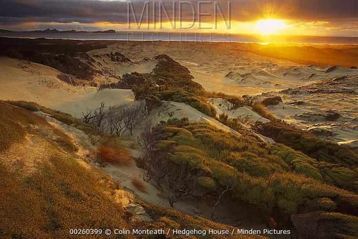Sunset from sand dunes above Mason Bay Beach, Rakiura National Park, Stewart Island, New Zealand  -  Colin Monteath/ Hedgehog House