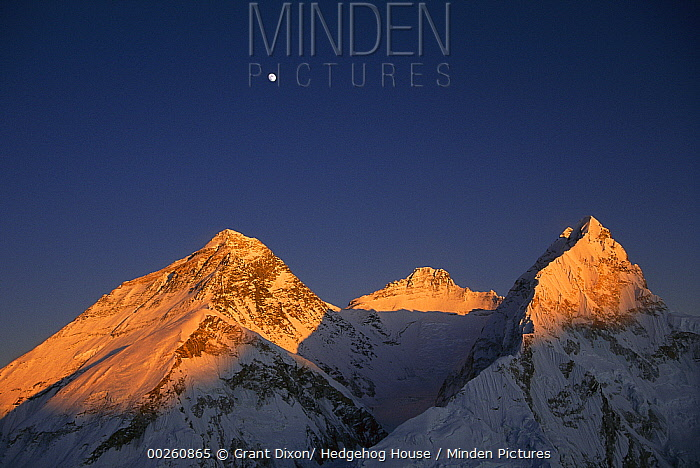 Moon over summit of Mount Everest, Lhotse, and Nuptse as seen from Mount Pumori at sunset, Sagarmatha National Park, Nepal  -  Grant Dixon/ Hedgehog House