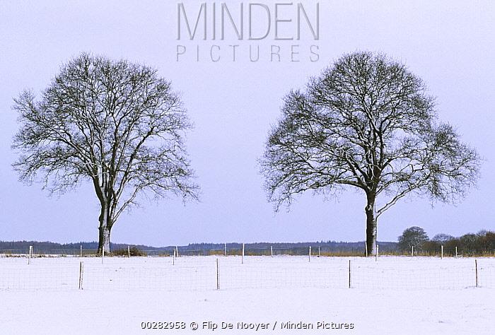 Two trees on horizon in winter, Europe  -  Flip de Nooyer