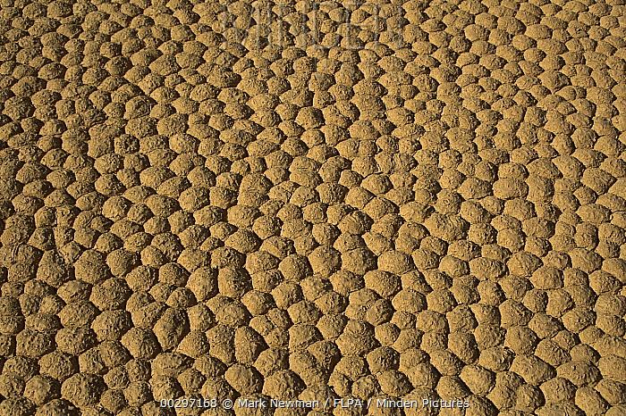 Close up of hexagonal mud crack saucers on Racetrack Playa, Death Valley National Park, California  -  Mark Newman/ FLPA
