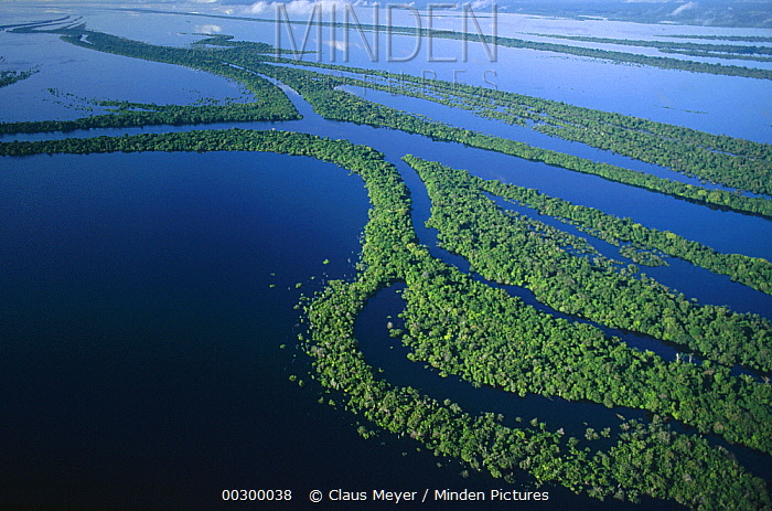 Anavilhanas archipelago in the middle of the Rio Negro River which is 24 kilometers wide at this point, Amazon ecosystem, Brazil  -  Claus Meyer