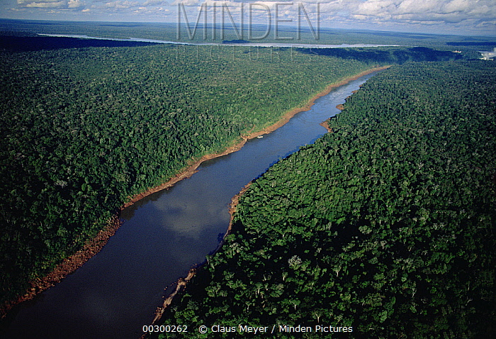 Timber plantation and soybeans on Terra Roxas near the Itaipu reservoir, Parana state, southern Brazil  -  Claus Meyer