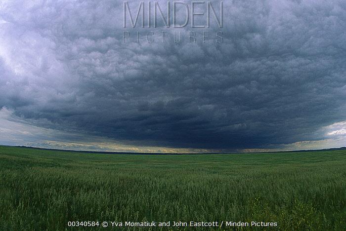 Dark cumulus clouds hanging over fields in summer, Wyoming  -  Yva Momatiuk & John Eastcott