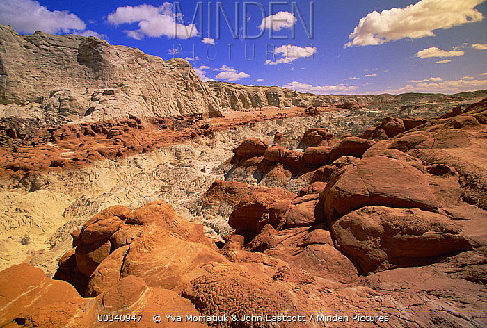 Erosion sculpted, petrified sand dunes, Canyon Cliffs, boulders and hoodoos, desert near Paria River, Grand Staircase-Escalante National Monument, Utah  -  Yva Momatiuk & John Eastcott