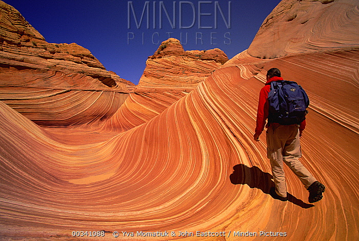 Lone hiker walking on colorful sandstone strong pattern of wavy lines in petrified sand dunes are exposed by erosion, Vermilion Cliffs National Monument, Colorado Plateau, Utah  -  Yva Momatiuk & John Eastcott