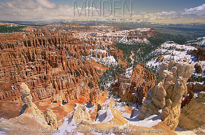 Panoramic view of unique erosional formations called hoodoos and fins after spring snowfall, Bryce Canyon National Park, Utah  -  Yva Momatiuk & John Eastcott