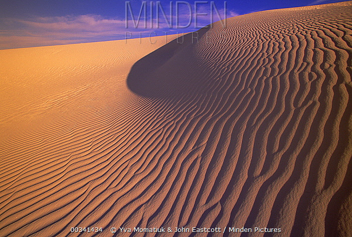 Gypsum sand dunes in the evening light, patterns and ridges caused by wind, White Sands National Monument, New Mexico  -  Yva Momatiuk & John Eastcott