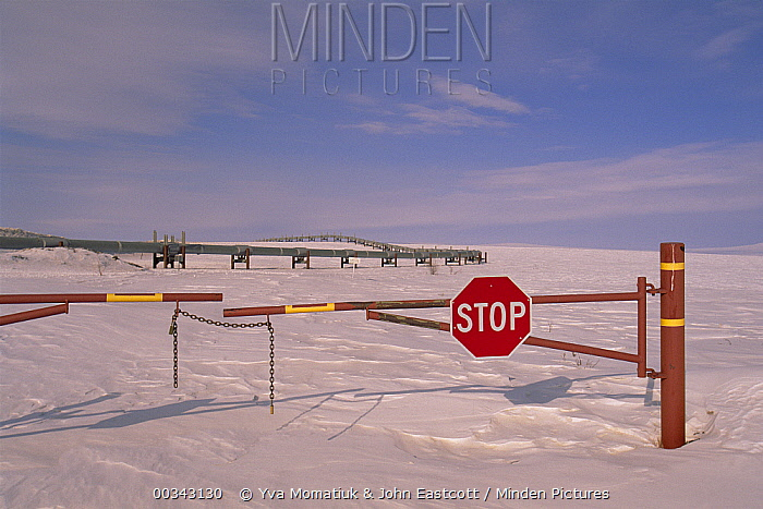 Stop sign on dirt road leading to Alyeska oil pipeline, North Slope, Alaska  -  Yva Momatiuk & John Eastcott