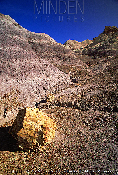 Logs and chunks of petrified wood rest on slopes and small hills near dry washes, Petrified Forest National Park, Arizona  -  Yva Momatiuk & John Eastcott