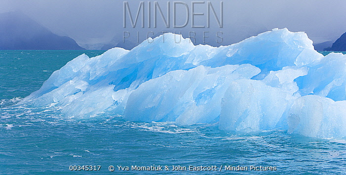 Small blue iceberg calved from nearby glacier melting in unusually warm temperature signaling global warming, fall, Stromness Bay, South Georgia, Southern Ocean, Antarctic Convergence  -  Yva Momatiuk & John Eastcott